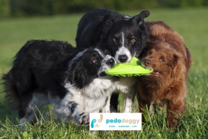 Symbiotic play is about give and take. It's about revving up and revving down. And too many dog owners don't know how to look for the signs that their dog is distressed and needs them to step in-between to ratchet down the level of play or give their dog a break.