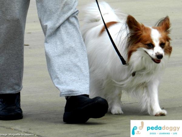Lead walking