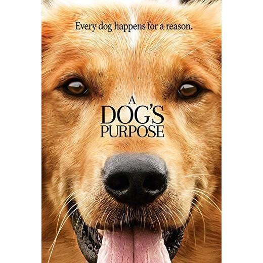 A dog's purpose movie picture